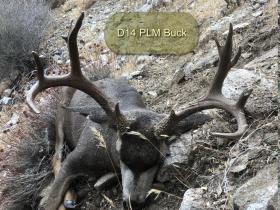 D14 PLM Buck